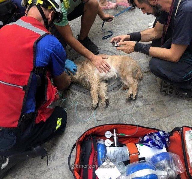 Bomberos reaniman a un perro inconsciente