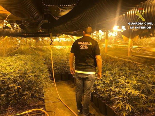 Plantación ilegal de marihuana en Alicante
