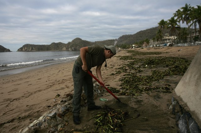 A municipal worker cleans a beach a day after tropical storm Bud hit the town of