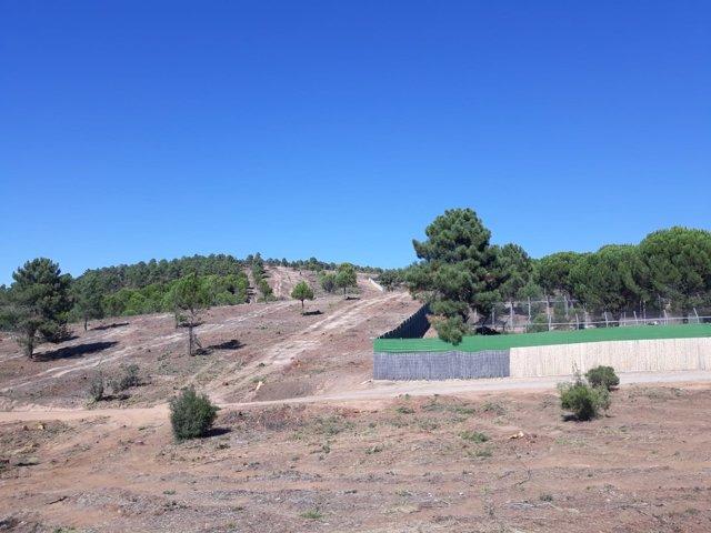 Trabajos preventivos en el entorno del centro de cría del lince La Olivilla.