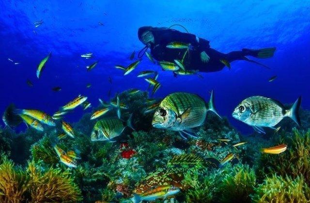 Buceo, fondo marino, peces, buceador, mar