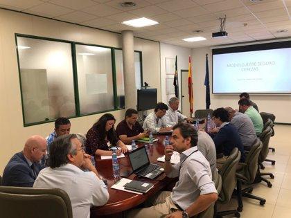 La Junta traslada al Ministerio de Agricultura una propuesta de mejora en el seguro de explotaciones de cereza