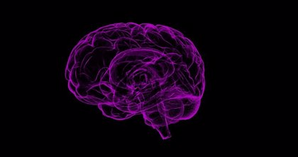 Confirman el uso de resonancias magnéticas para revelar cómo el cerebro se comporta ante una compra