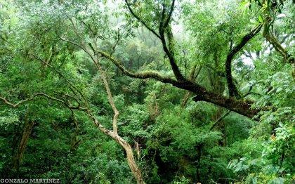 La protección de los bosques subtropicales de Paraguay, premiado por Fundación BBVA