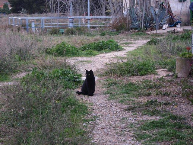 Gato negro, colonia de gatos en el Parque Pignatelli de Zaragoza