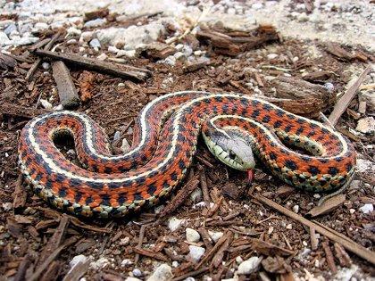 Nanopartículas para tratar las mordeduras de serpiente