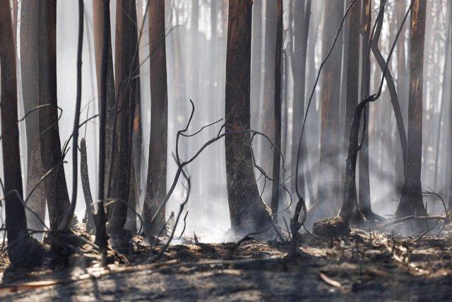 El incendio forestal de Mondariz (Pontevedra)