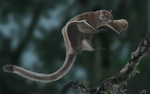 Reconstrucción del fósil de ardilla voladora más antiguo conocido