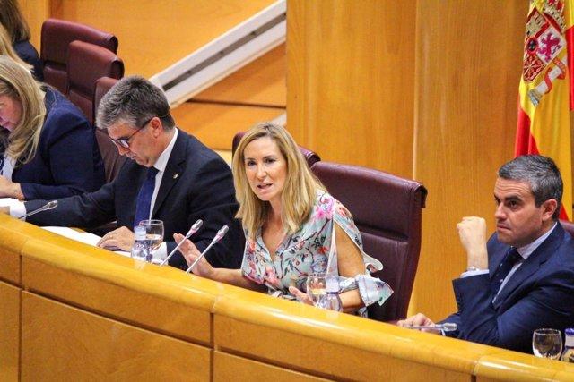 La presidenta del PP de Navarra, Ana Beltrán, en el Senado