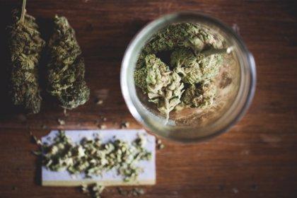 Una sustancia derivada del cannabis puede atenuar los efectos adictivos de la cocaína