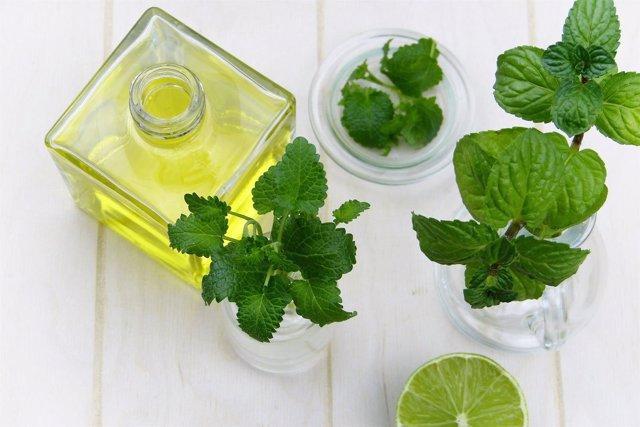 Menta, plantas medicinales