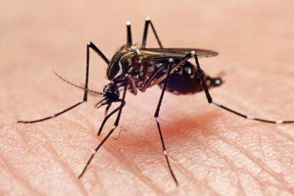Medidas para frenar al mosquito tigre (y al dengue)