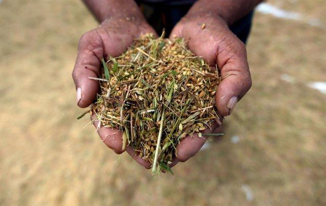 Un agricultor muestra semillas en Colombo (Sri Lanka)