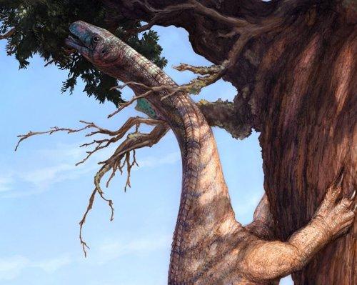 Sarahsaurus aurifontanalis