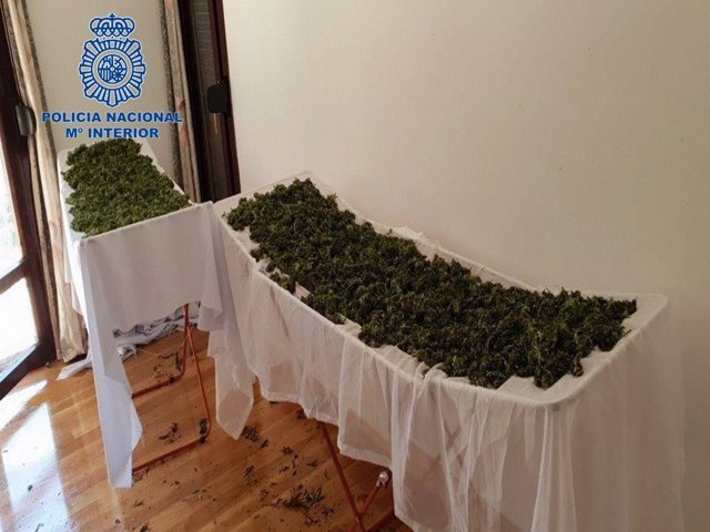Marihuana encontrada en el domicilio del detenido