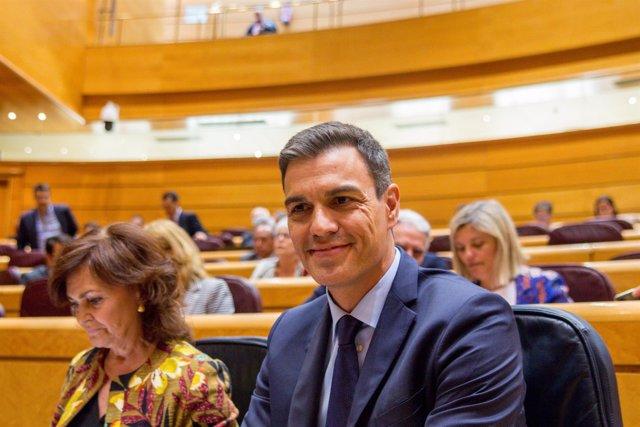 Pedro Sánchez en la sesión de control al Gobierno en el Senado