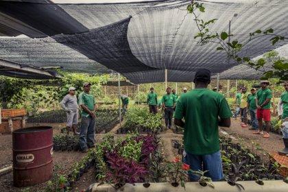 Reclusos de una cárcel de Panamá contribuyen a reforestar el país en un proyecto respaldado por el CICR