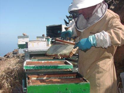 Murcia se convierte desde este lunes en el centro de la apicultura nacional