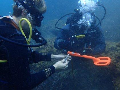 El proyecto 'Plumbum' permite extraer del fondo marino más 500 kg de plomos de pesca deportiva