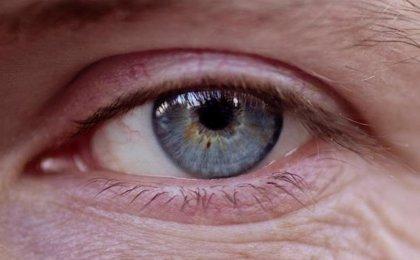 Retinas humanas cultivadas explican cómo se desarrolla la visión del color