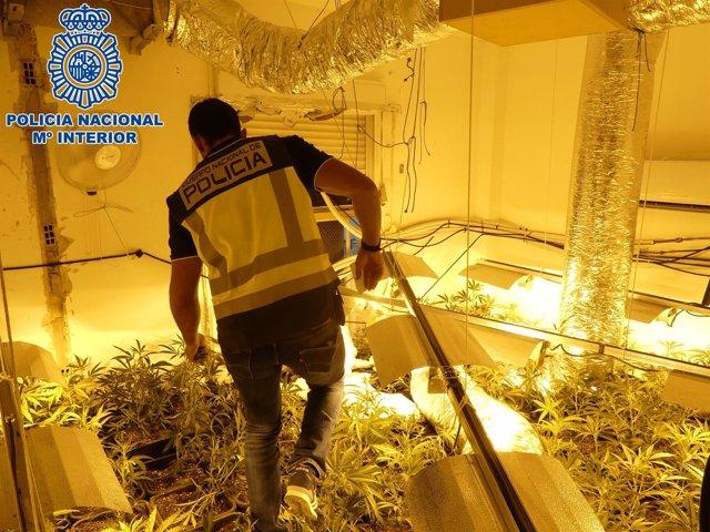 Plantación de marihuana en interior de vivienda en Sanlúcar