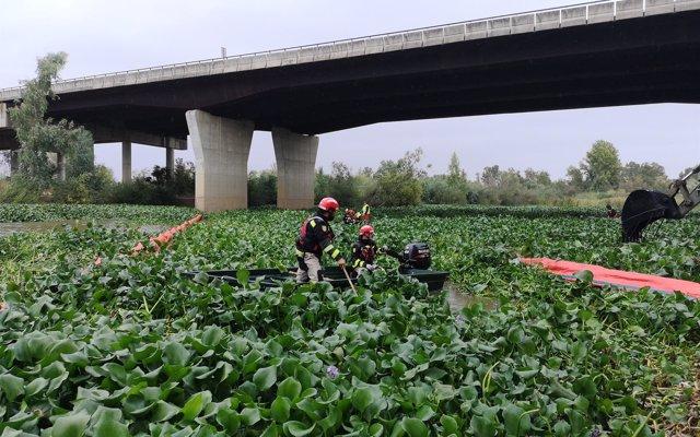 Efectivos de la UME inician en Badajoz los trabajos para eliminar el camalote del río Guadiana