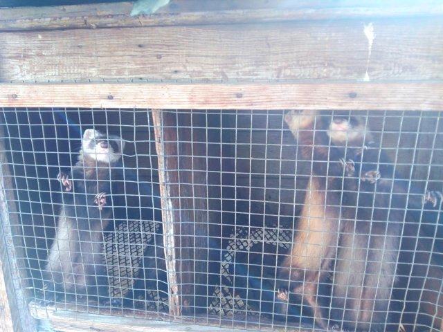 Animales enjaulados