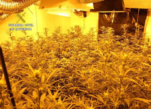 Imagen de la plantación de marihuana desarticulada