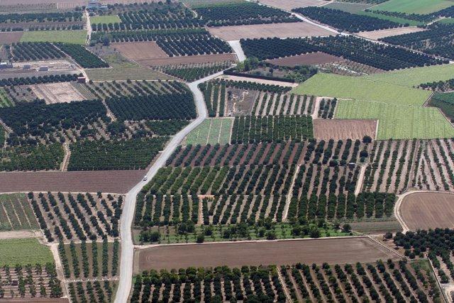 Campos, hortes, minifundis, horts, agricultura, arbres, explotació agrària