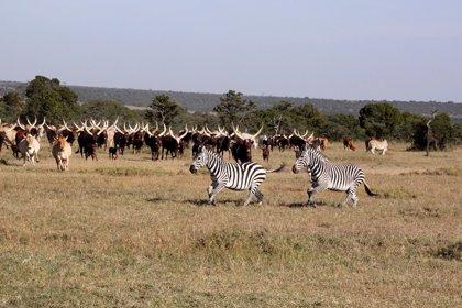 Fauna salvaje y ganado pueden convivir satisfactoriamente en África