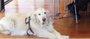 La ley de perros guía de C-LM ya está lista para ir a las Cortes regionales