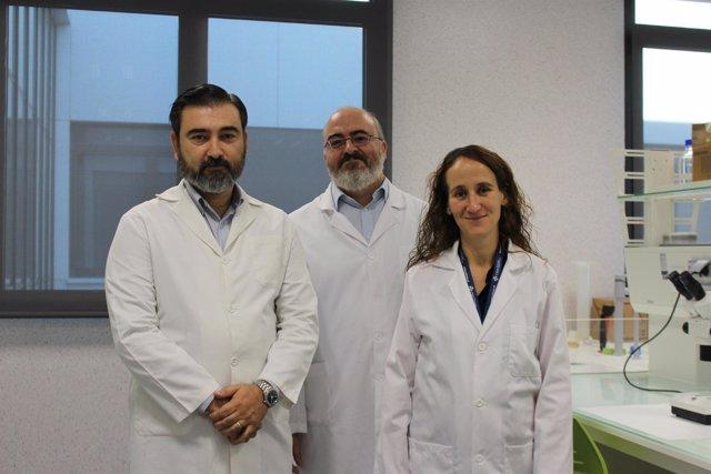 Los investigadores de la UCH CEU