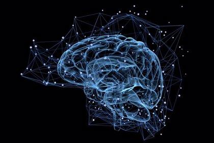 Identifica un nuevo gen causante de la epilepsia infantil severa