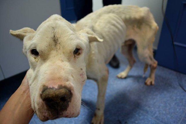 El perro 'Ángel', tras su rescate de una finca en Bayárcal