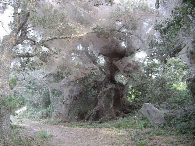 Temporada de arañas en australia