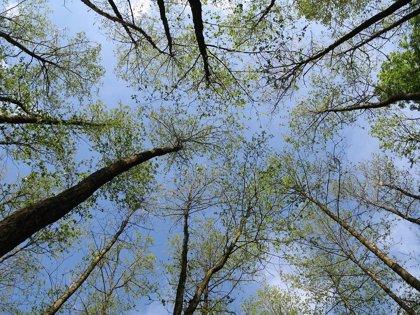 Uruguay y su camino hacia el Crecimiento Verde