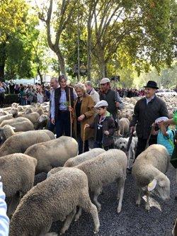 MAS DE 1500 OVEJAS Y 100 CABRAS RECORREN MADRID EN EL 25 ANIVERSARIO DE LA FIESTA DE LA TRANSHUMANCIA