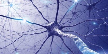 Nueva visión de la evolución del sistema nervioso
