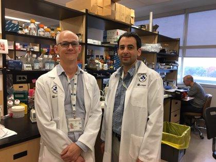 Una nueva combinación de medicamentos podría curar la leucemia resistente a la quimioterapia