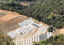 Dos detinguts i 3.700 plantes de marihuana comissades en una plantació a gran escala a Sant Cebrià de Vallalta (ACN)