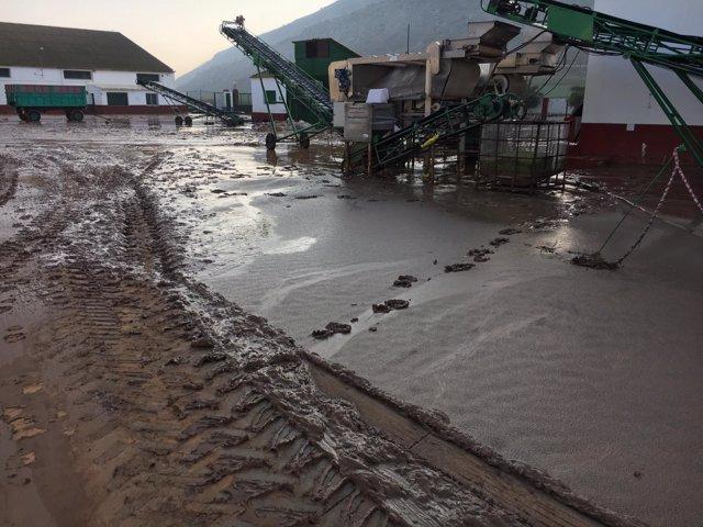 Exteriores de la cooperativa de Teba tras las lluvias