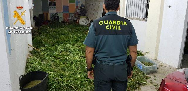Intervención de marihuana por parte de la Guardia Civil