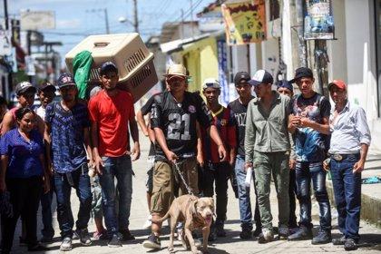 Bolillo, el pitbull que viaja como uno más de la caravana de migrantes hondureños