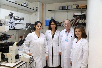 Investigadores españoles detectan un mecanismo de envejecimiento del corazón