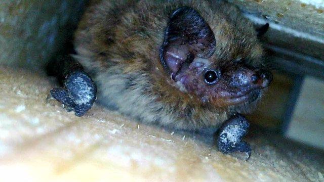 Río Segura, un ecosistema valioso para los murciélagos