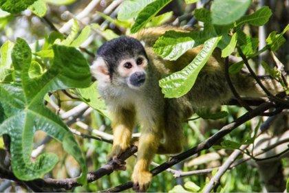 Iberoamérica pierde el 89% de su población animal en menos de 50 años