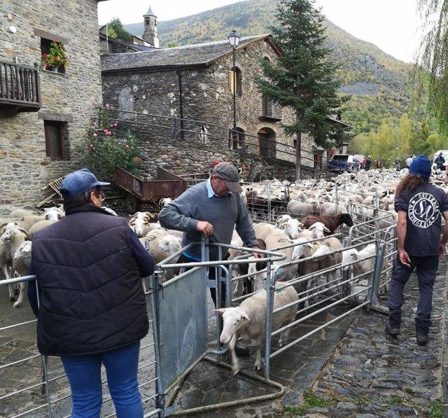 Agrupamiento de ovejas