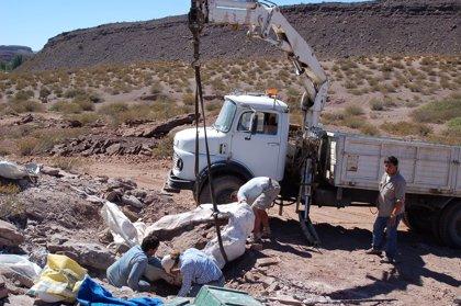 Descubren una nueva especie de dinosaurio de 110 millones de años de antigüedad en Argentina