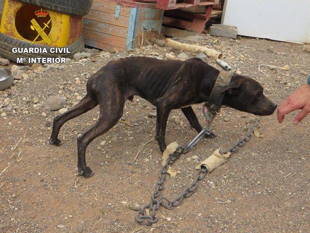 Estado en el que fue encontrado uno de los perros