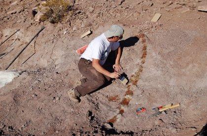 Investigadores hallan en Argentina una nueva especie de dinosaurio